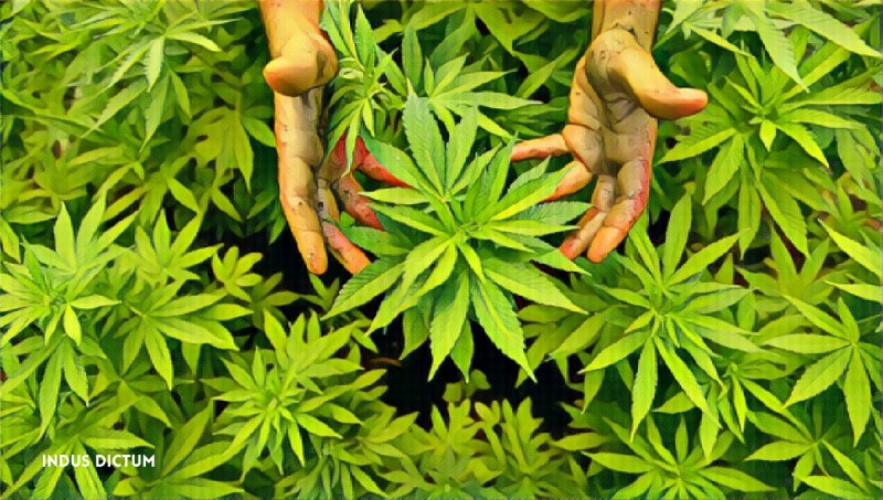 cannabis hands watermark.jpg