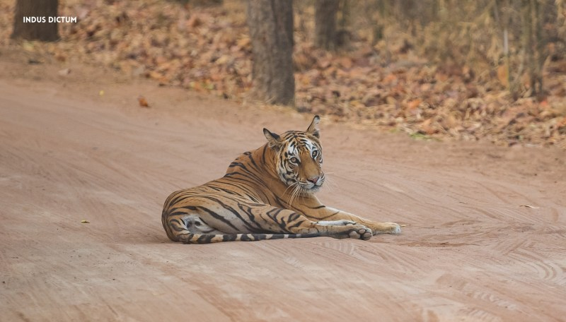 Tiger Conservation Environment sourabh bharti