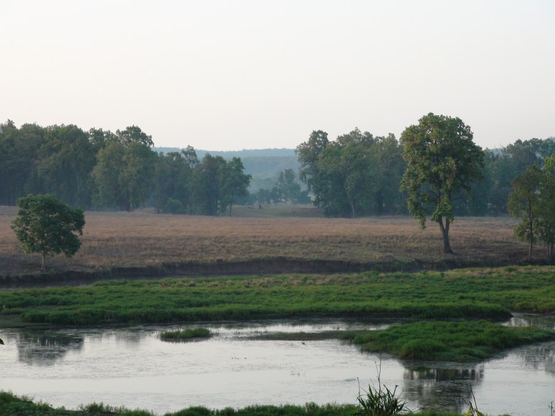 Environment and Wildlife Restoration (Image by S. P. Yadav)