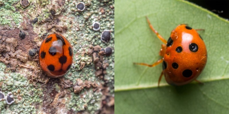 beetle look alike | Indus Dictum