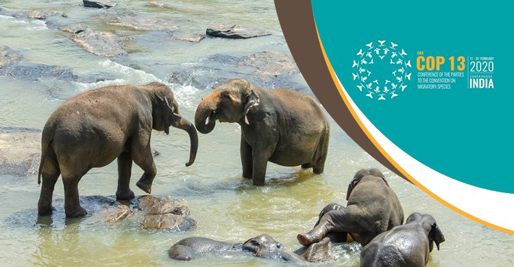 COP13: UN body to now protect Asian elephant, great Indian bustard, Bengal florican