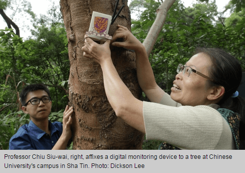 Incense Trees SCMP article photo 29.10.14