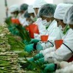 México teme restricciones a sus exportaciones agrícolas a EU por política energética