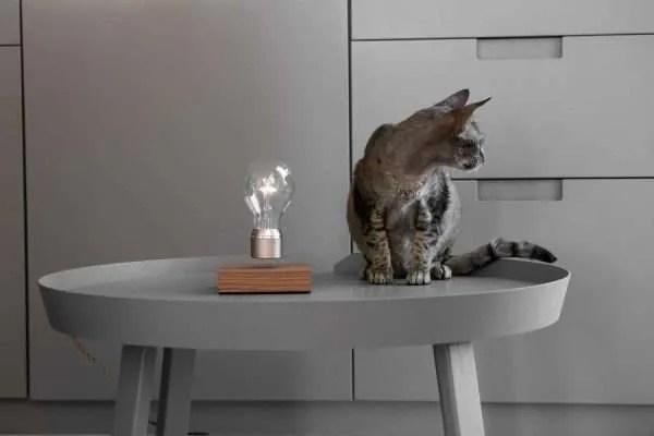 flyte buckminster met kat
