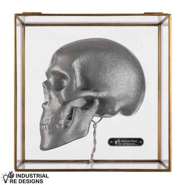 Schedel-skull-in-glazen-box-BINK-1