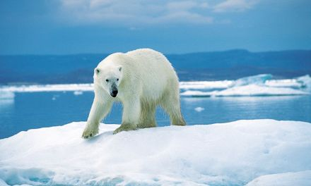 Redditors Alight Over Global Warming Controversy