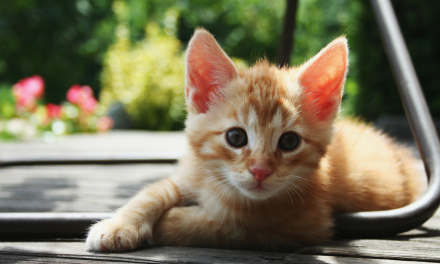 Purrfect Pet Adoption Tips in Honor of Adopt A Cat Month
