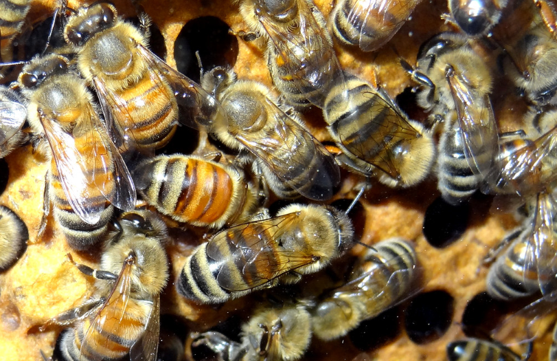 Buzzed Bees