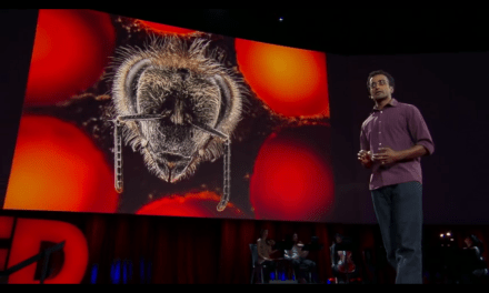 Creating the Mite-Resistant Honey Bee