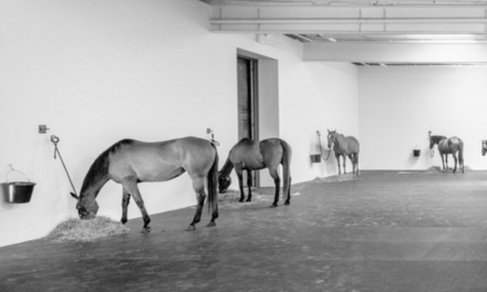 'Untitled (12 Horses)' Currently on Display at Greenwich Village Gallery