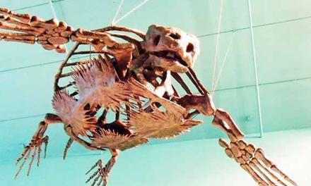 Earliest Sea Turtle Fossil 120 Millions Years Old