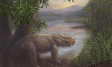 Study Looks at Survivability of Food Webs During Mass Extinctions