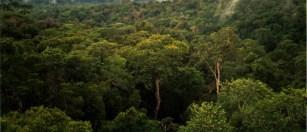 Amazon_Manaus_forest