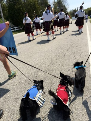 Indy and Lucy, DCSR parade