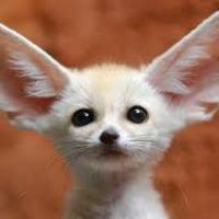 Психосоматика ОТИТА и других проблем с ушами
