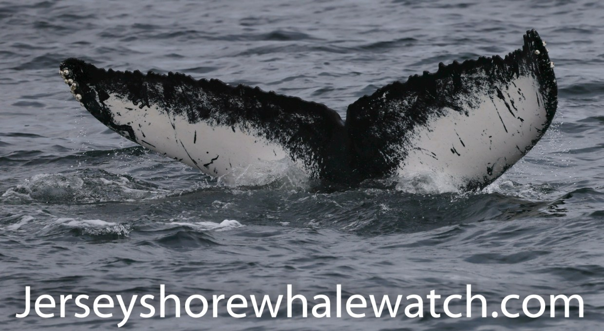 Canon R5 photos humpback whales summer 2020 examples-9403