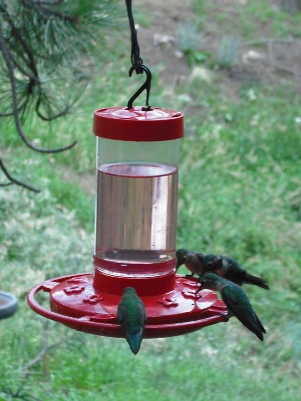 First Nature 3051 Hummingbird Feeder