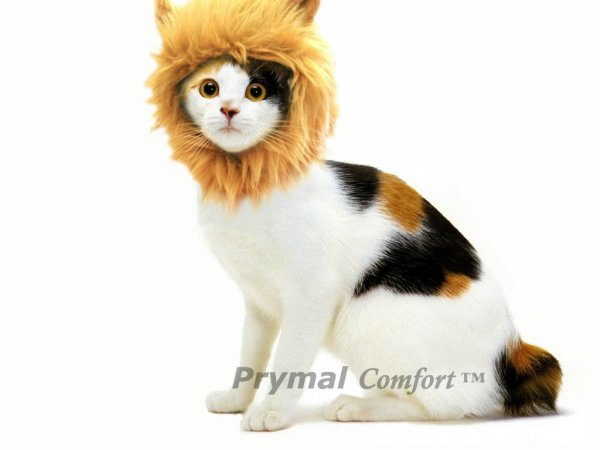 Turn Your Cat or Small Dog Into a Ferocious Lion King