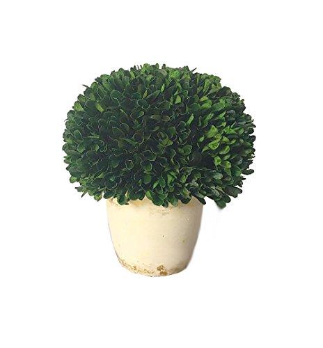 Galt International Ball Topiary Plant with Decorative Pot