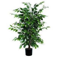 Vickerman 4' Artificial Ficus Bush set in Black Pot