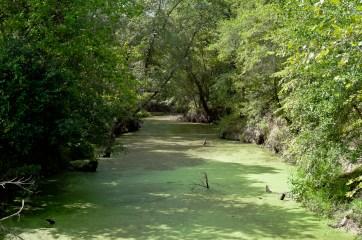 DSHP-IB-8-Mill Creek bank