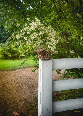 Almost hidden from the eyesight, a birdhouse sat at the end of the fence.