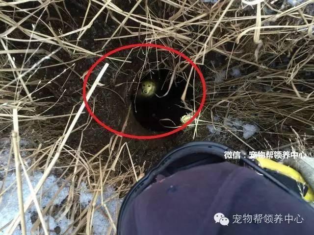 狗狗被困4米多深坑,不斷犬吠終獲消防員救出!