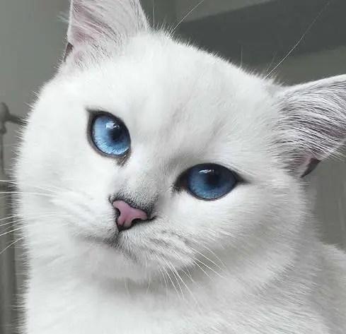 那些年我們追過的貓明星,別以為它們只是會賣萌!