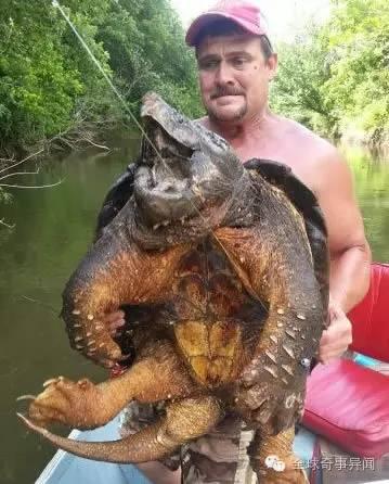 美國男子野外釣到珍稀動物巨型鱷龜 重達100磅