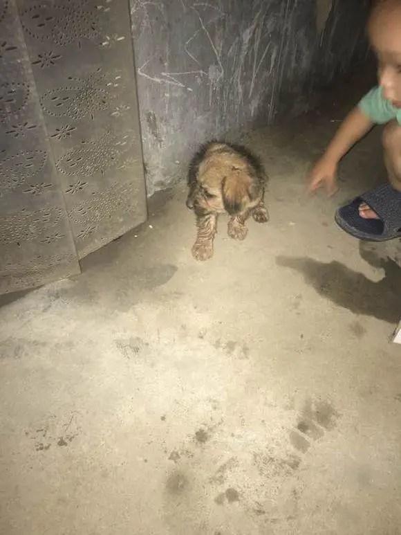 兒子跑來說:媽媽我撿到一隻狗狗!卻被它的模樣嚇壞