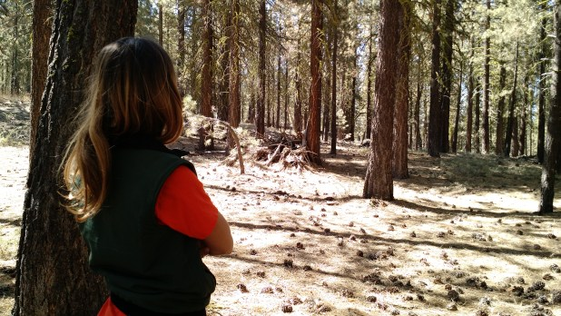 USFS southern California province ecologist Nicole Molinari among Jeffrey pines in the Los Padres NF outside Los Angeles. Aug. 31, 2016. Ingrid Lobet/inewsource