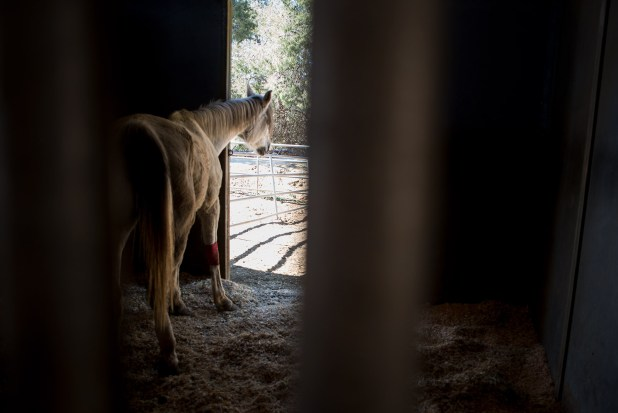 A horse peeks outside its stable at the HiCaliber Horse Rescue in Valley Center on March 2, 2018. (Brandon Quester/inewsource)