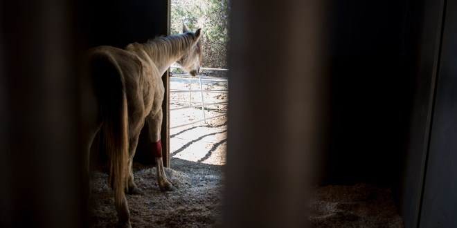 Eyeballs, Del Mar and manure: More on HiCaliber Horse Rescue