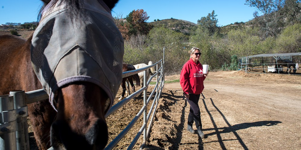 HiCaliber Horse Rescue back to fundraising after filing financial paperwork