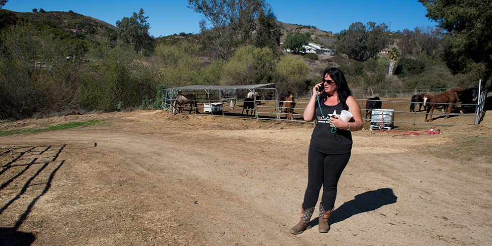 HiCaliber Horse Rescue set to close Saturday as investigations of nonprofit continue