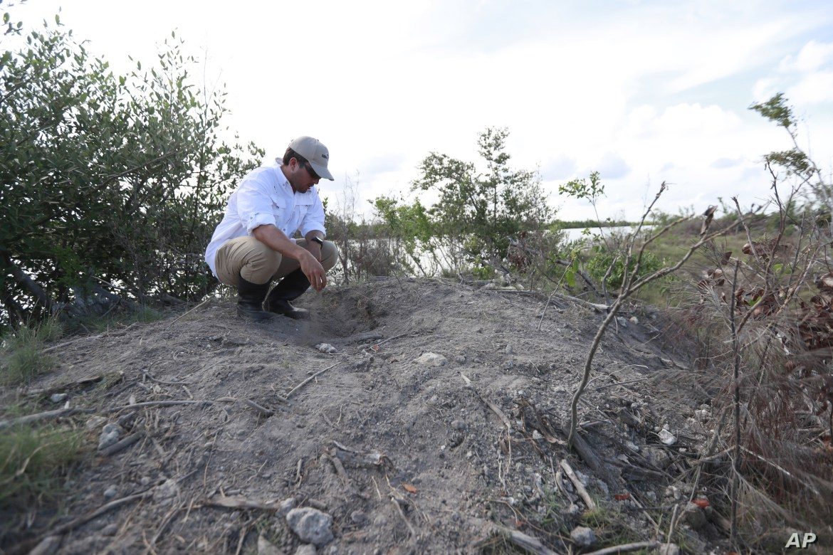 Wildlife biologist/crocodile specialist Michael Lloret points out a crocodile nest on one of the berms along the cooling canals next to the Turkey Point Nuclear Generating Station, Friday, July 19, 2019, in Homestead, Fla. The 168-miles of man-made…