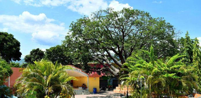 Ceiba en el Parque de la Sagrada Familia de El Jícaro