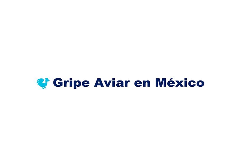 gripe aviar mexico 2019