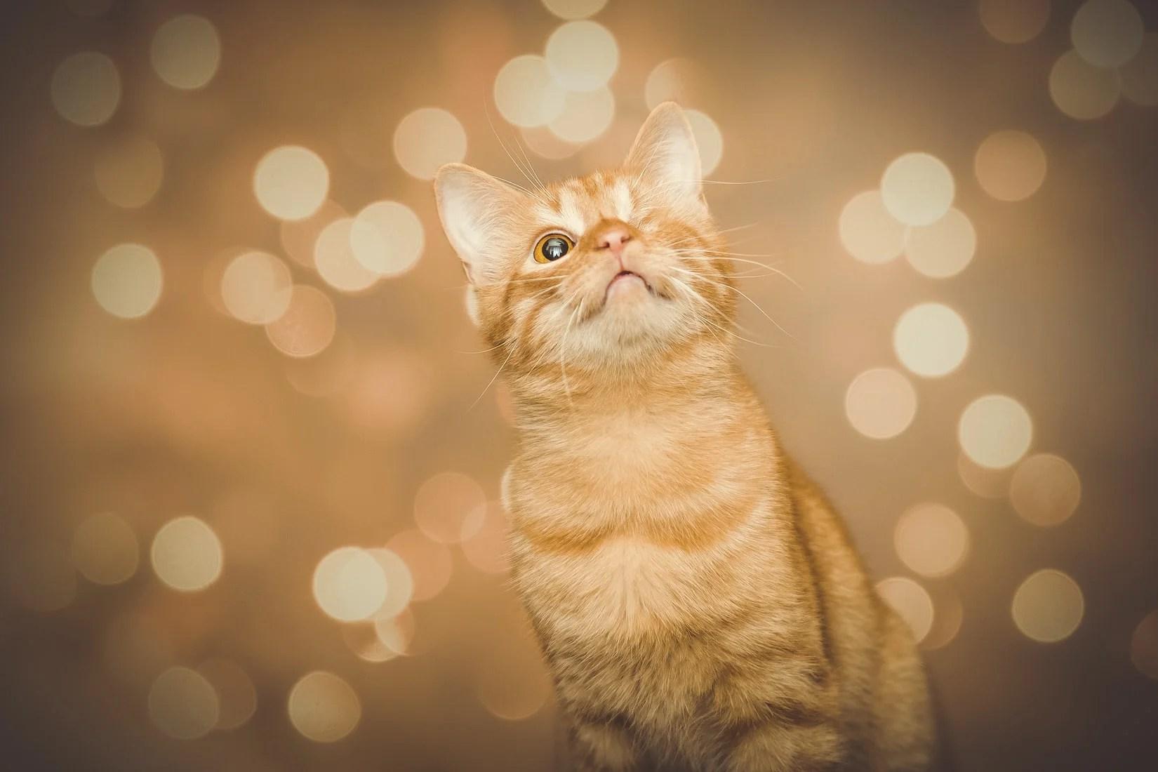 Heilgebete für Katzen & alle Tiere