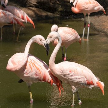 Pink Flamingos that should be reomved from the yard to create good first impression