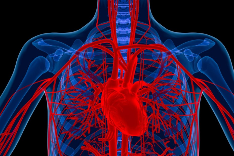 What Blood Vessel Experiences The Steepest Drop In Blood Pressure