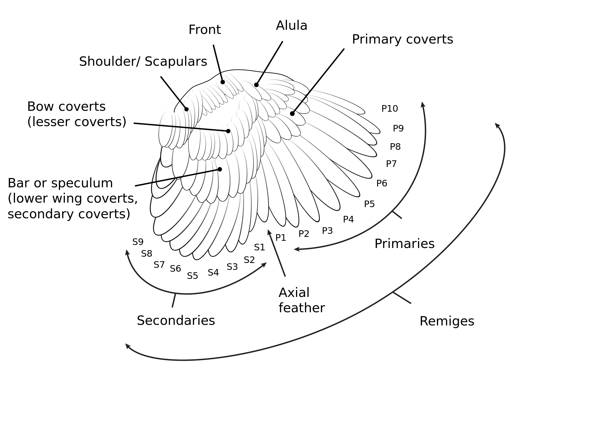 How To Id A Feather