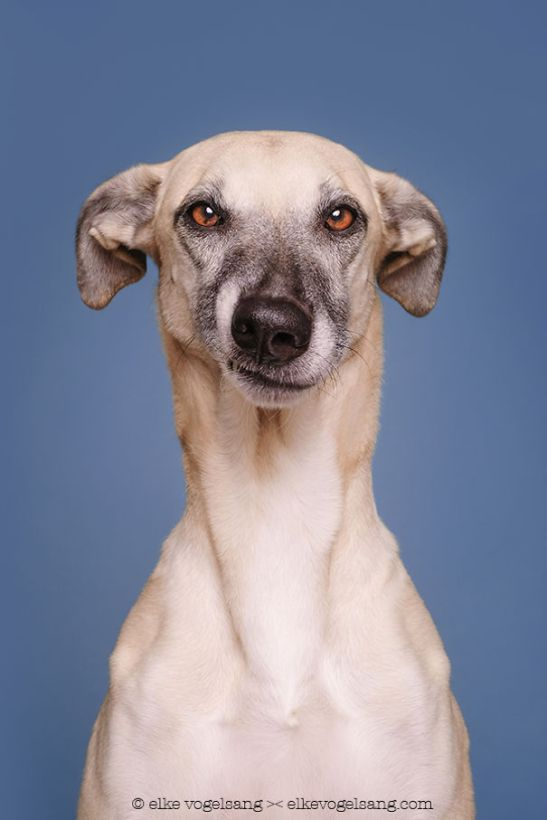 dogs-questioning-the-photographers-sanity-8__605