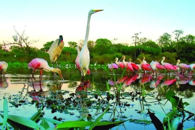 Aves do Pantanal – por: Daniel De Granville (PhotoInNatura)