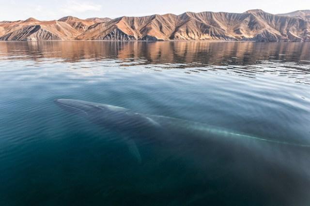 baleias_3