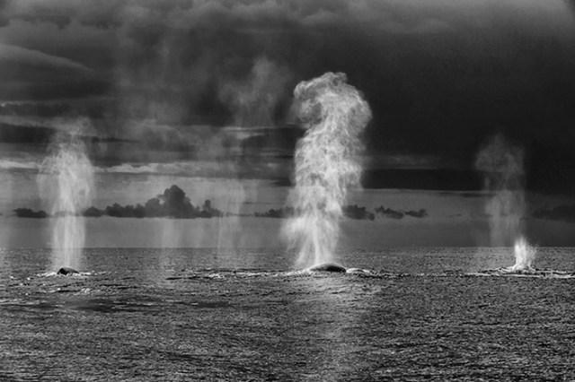 baleias_6