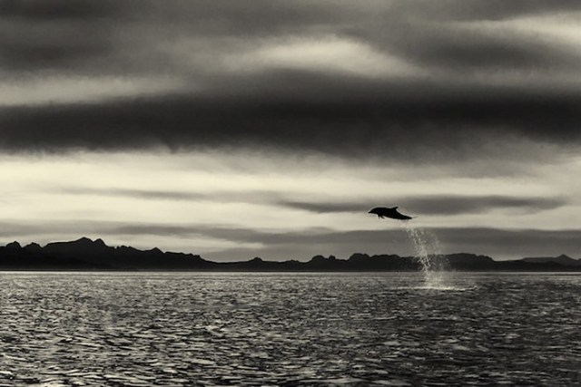 baleias_8