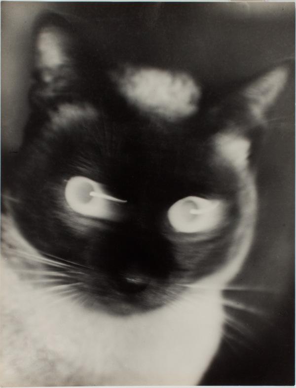"""Otto Umbehr - """"Katz"""" - Cat 1927"""