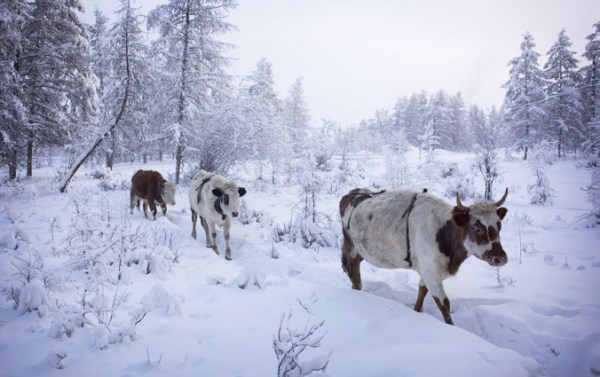 oymyakon-village-in-russia-by-amos-chapple-12-677x425