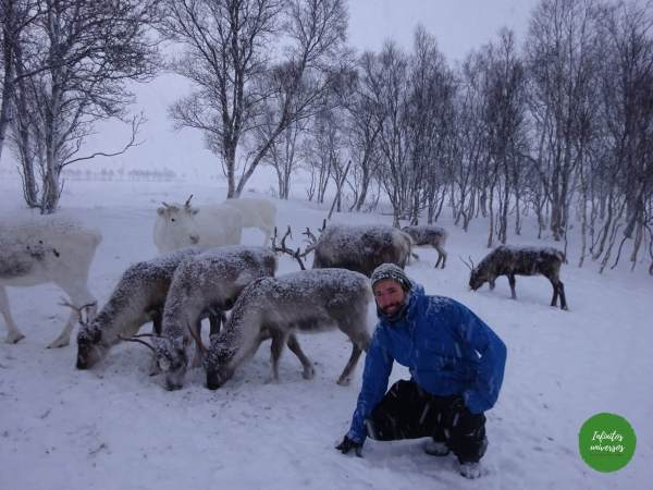 Rodeado de renos sami Laponia Viaje a la Laponia noruega en una semana: visitas, mapa y consejos
